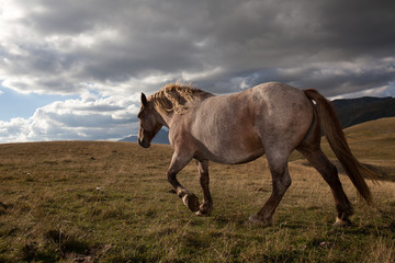 Cavallo grigio cammina in montagna sotto un cielo nuvoloso