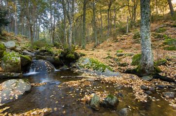 otoño en Canencia