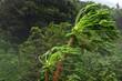 Leinwanddruck Bild - Vent cyclonique à la Réunion
