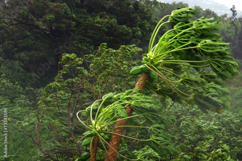 Fotobehang Onweer Vent cyclonique à la Réunion