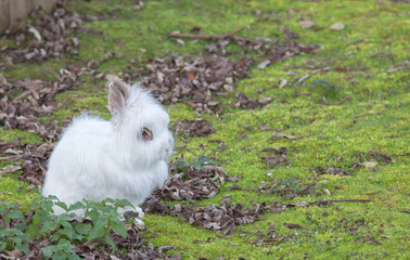 Cute Angora rabbit sitting in the grass on a autumn day