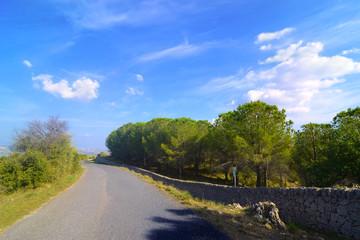 Strada con alberi sui lati