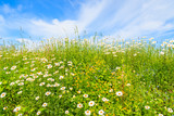 Flowers on green meadow in summer, Tatry Mountains, Poland