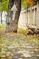 Tree on bicycle lane