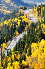 Autumn road top view
