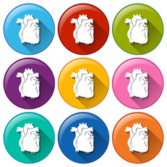 Buttons with heart organs