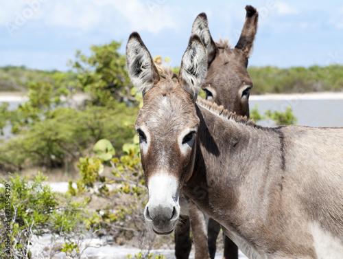 Poster Ezel Donkey's Look