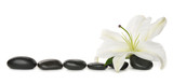 Fototapety White lily and stones