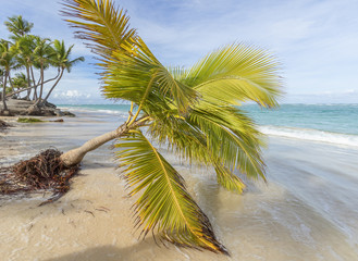 Palm trees on the beach.
