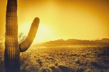 Saguaro cactus tree desert landscape, Phoenix, Arizona.