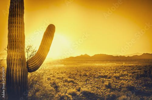 Leinwandbild Motiv Saguaro cactus tree desert landscape, Phoenix, Arizona.