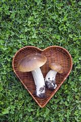 two mushroom boletus in heart form basket on grass