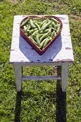 pea pods in heart form basket on old seat