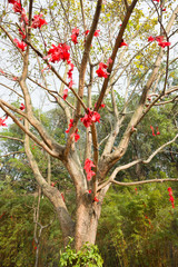lots of wishing ribbon hanging on blessing tree