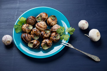 Bourguignonne snail au gratin, dark blue wooden background