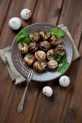 Bourgogne snails with garlic butter and parsley, high angle view