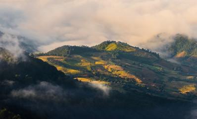 Morning mist rice terrace