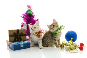 Cute tabby kitten with present