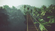 Rope bridge in misty jungle with palms. Backlit.