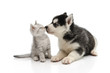 Cute puppy kissing kitten