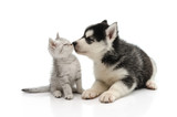 Cute puppy kissing kitten poster