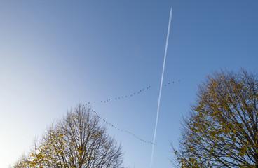 Flight of geese below an aircraft at fall