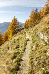 Sentiero di montagna in autunno tra gli alberi