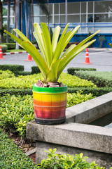 Colorful of baked clay pot with  Bromeliad plant