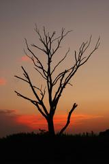 夕日と枯れ木