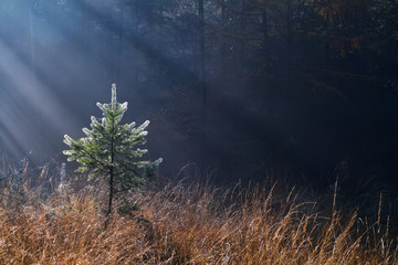 morning sunbeams in misty forest