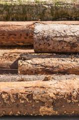 Forstwirtschaft, Holzindustrie, Baumfällung, Holzhandel