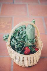 Basket with fresh produce