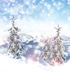 Winter background. winter forest