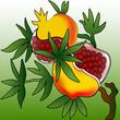 Ripe pomegranate illustration colorful background