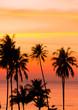 Leinwanddruck Bild - Sunset Divine Palm Paradise