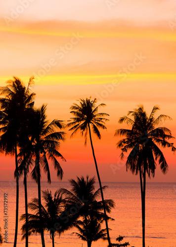 Leinwanddruck Bild Sunset Divine Palm Paradise