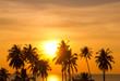 Leinwanddruck Bild - Sunset Divine Coconut Horizon