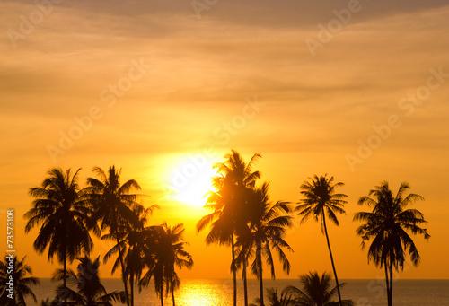 Leinwanddruck Bild Sunset Divine Coconut Horizon