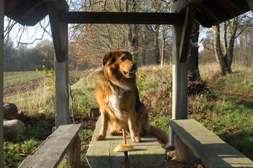 Hund mit Wurst und Brötchen