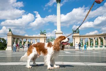 Städtereisen mit Hund in Budapest