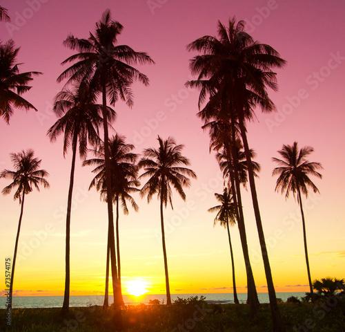 Palm Paradise Burning Skies - 73574175