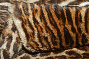 pelliccia di tigre siberiana