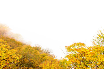 Trees were autumn leaves in the Mist