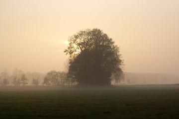 Baum im Novembernebel