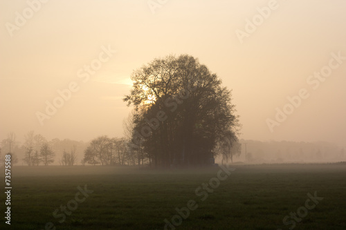canvas print picture Baum im Novembernebel