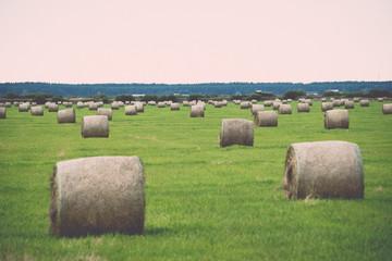 rolls of hay in green field. Vintage.