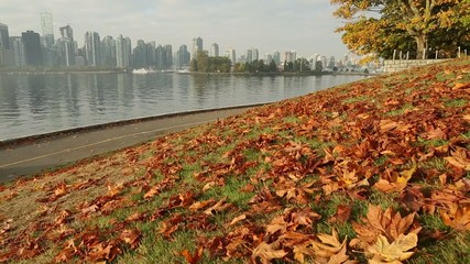 Autumn Leaves, dolly shot Stanley Park, Vancouver