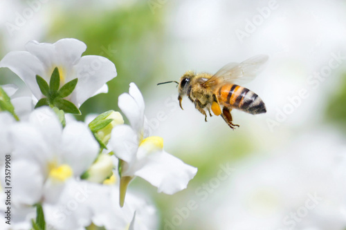 Tuinposter Bee Honeybee