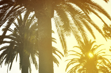 Palm trees in sunset light, tropical retro look