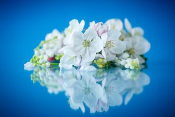 beautiful spring flowers apple